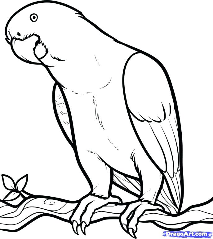 687x773 Coloring Pages African Animals Media