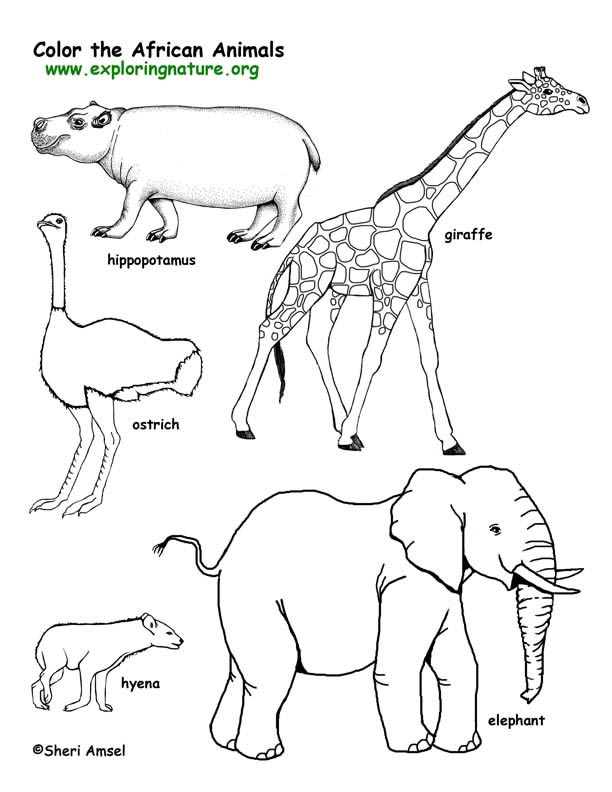 612x792 African Animals Coloring Pages Savanna (African) Animals