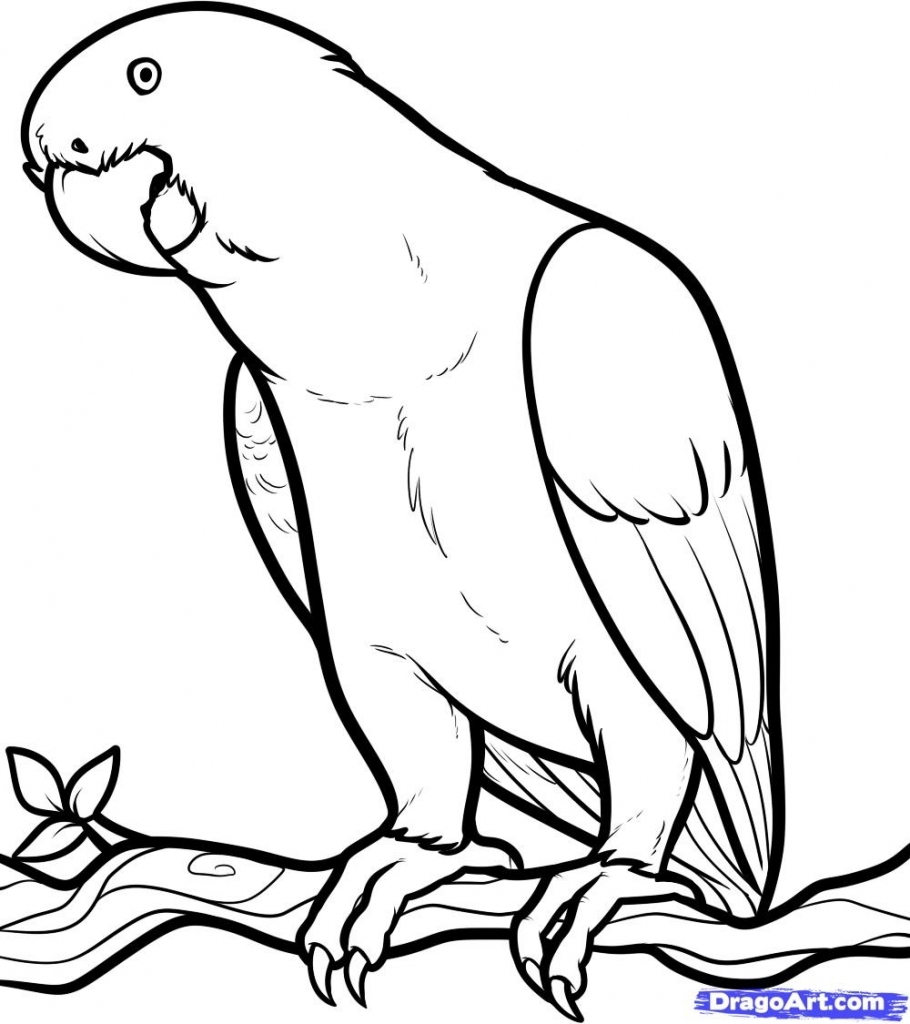 910x1024 How To Draw A Parrot How To Draw An African Grey African Grey