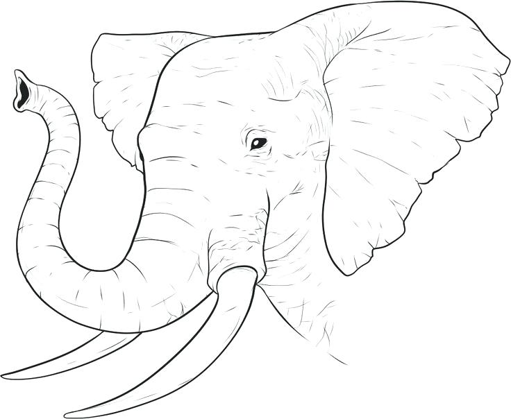 African Elephant Drawing at GetDrawings.com | Free for personal use ...
