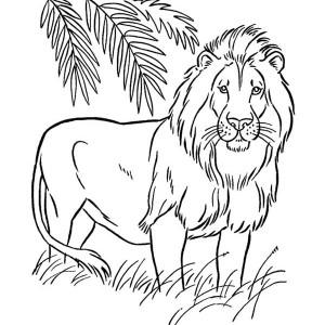 300x300 coloring pages amazing coloring pages draw a lion dazzling how - Lion Coloring
