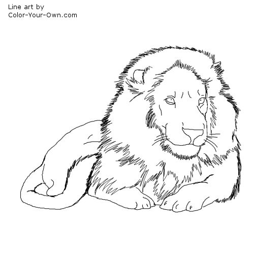 500x500 Male African Lion