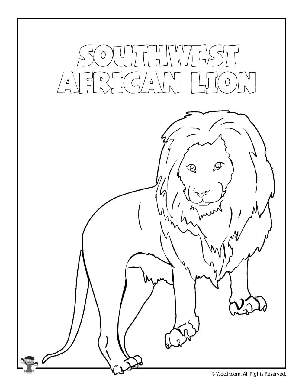 1000x1294 Southwest African Lion