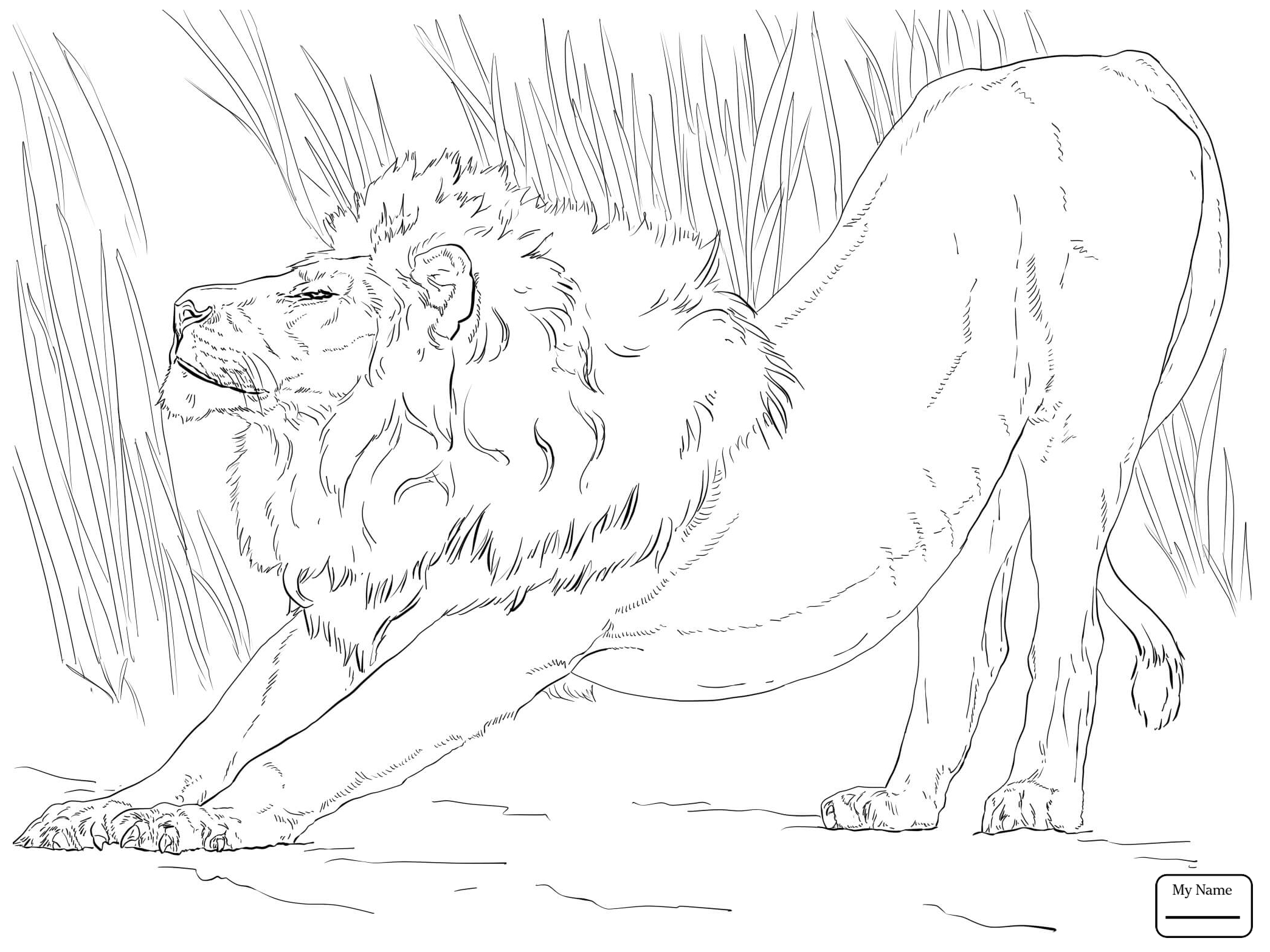 2089x1567 Coloring Pages For Kids Mammals Joyful Lion