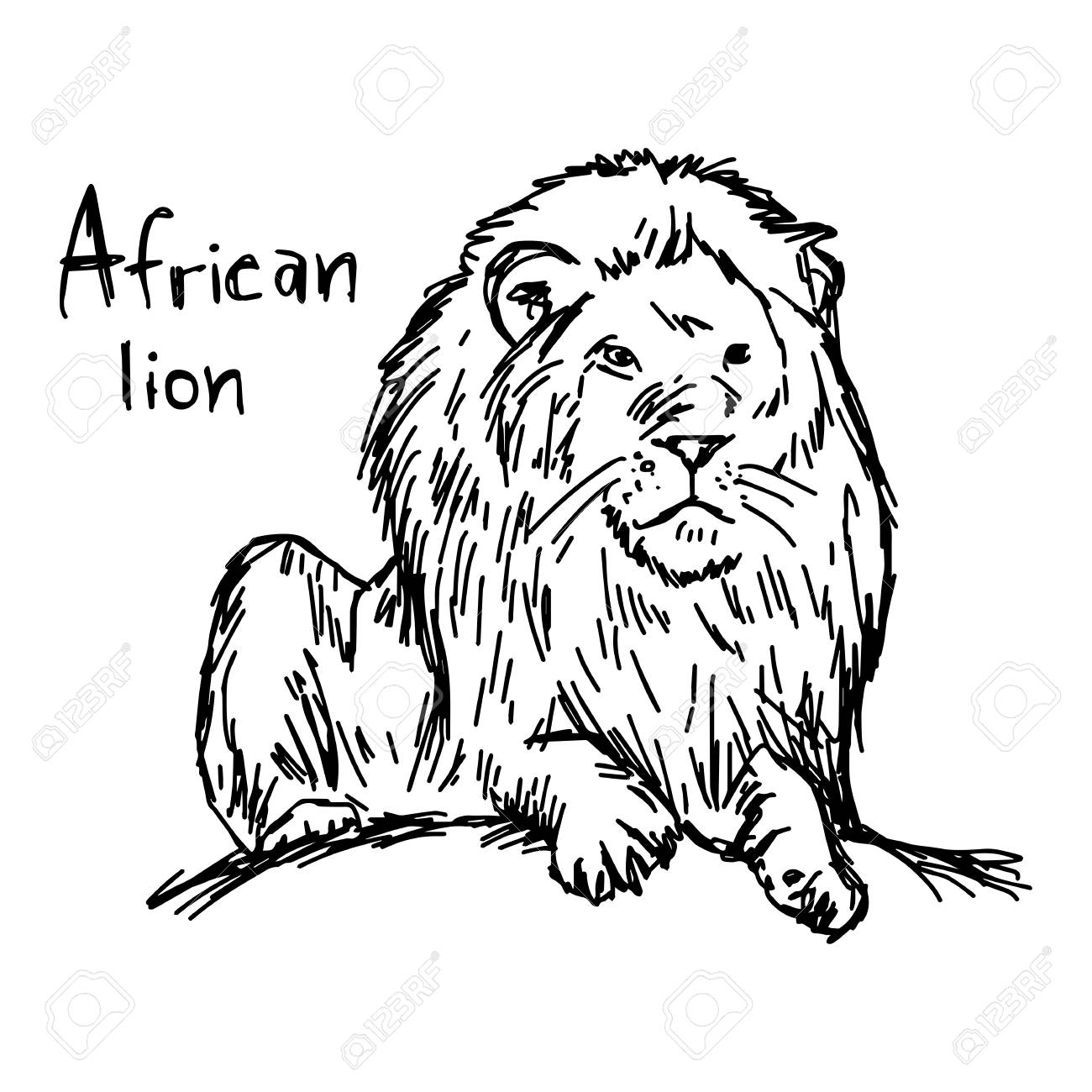 1300x1300 African Lion