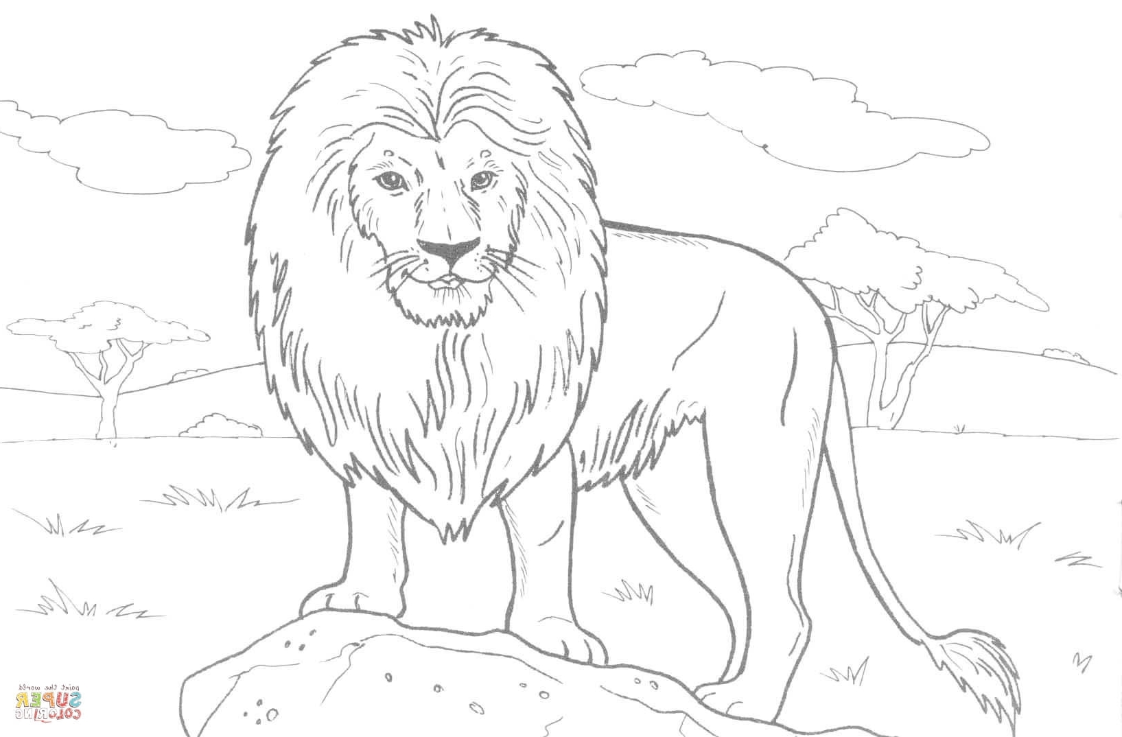 African Lion Drawing at GetDrawings