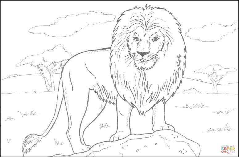 775x510 African Lion Coloring Page For Creativity