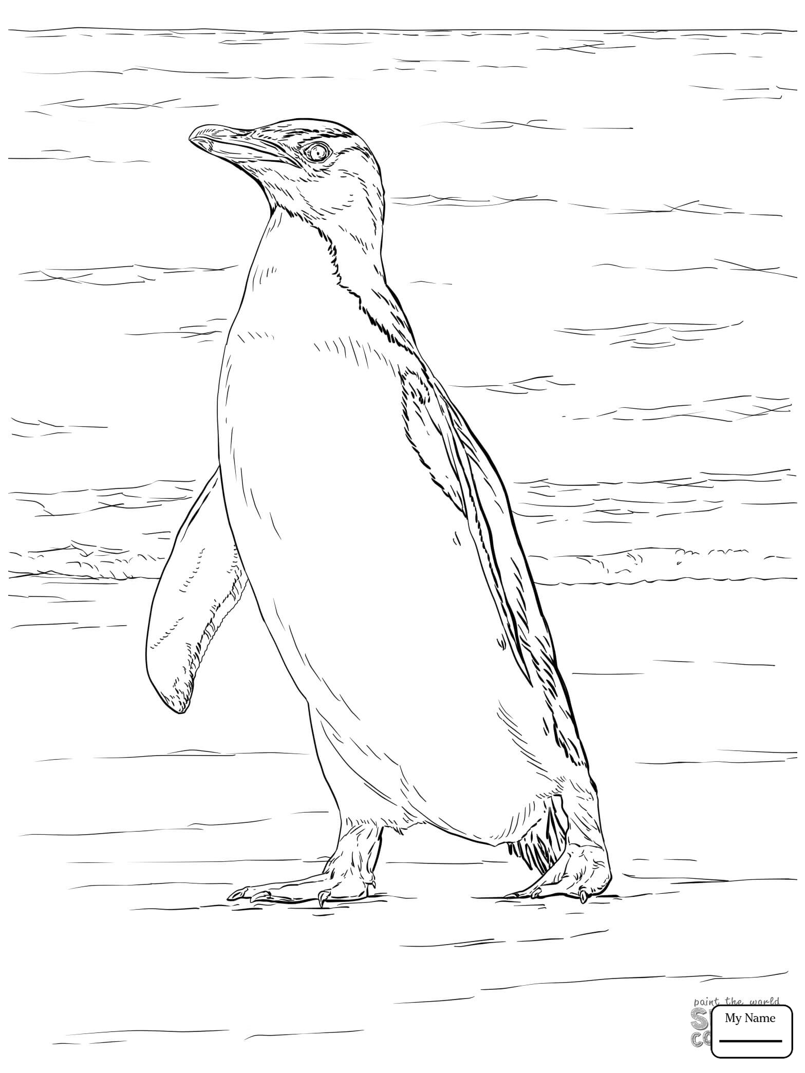 1567x2089 Coloring Pages For Kids Penguins Life Cycle Of A Penguin Birds