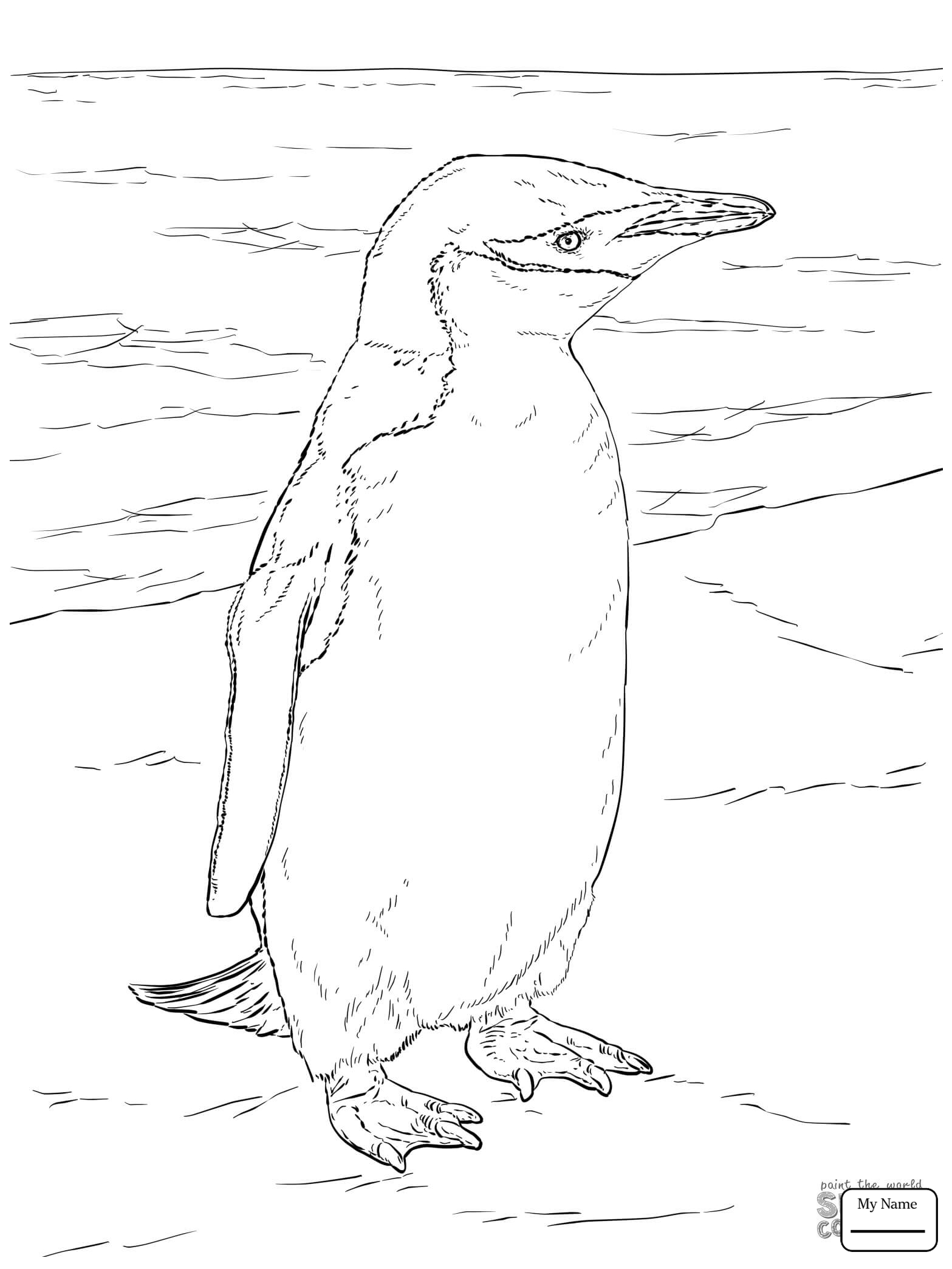 1567x2089 Coloring Pages For Kids Penguins Birds Chinstrap Penguin Family