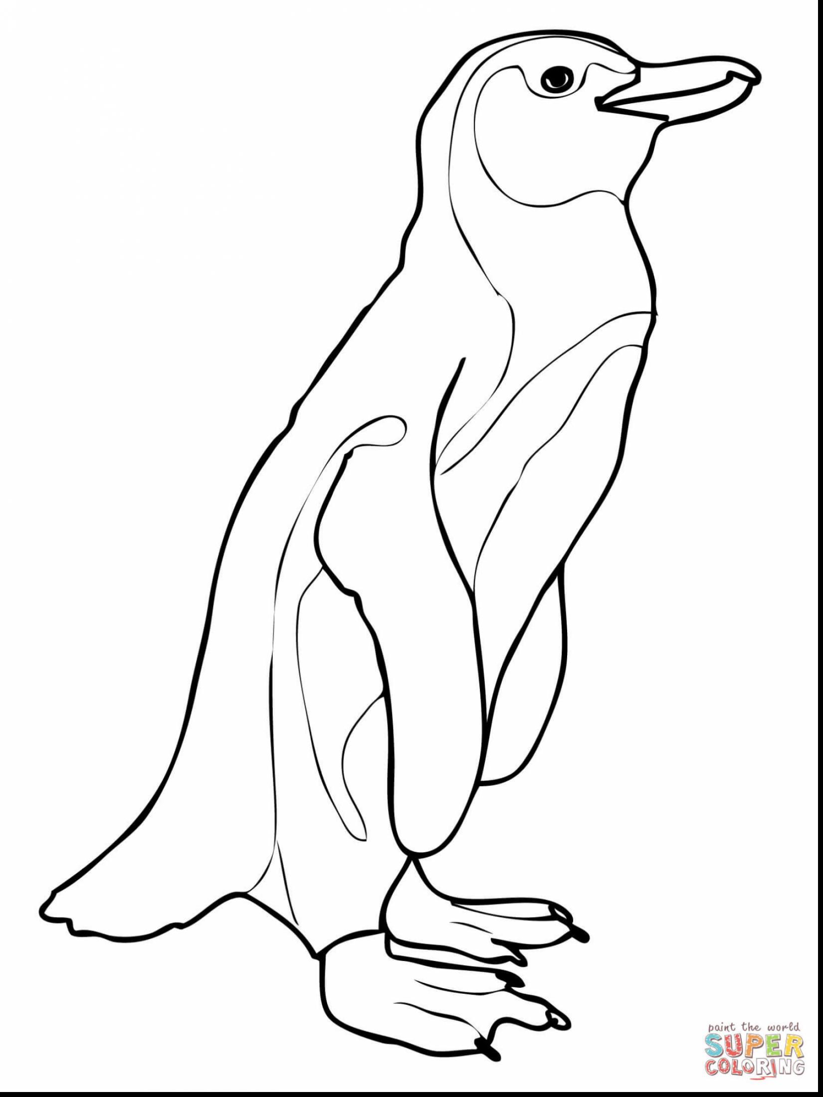 1650x2200 Extraordinary African Penguin Coloring Page With Africa
