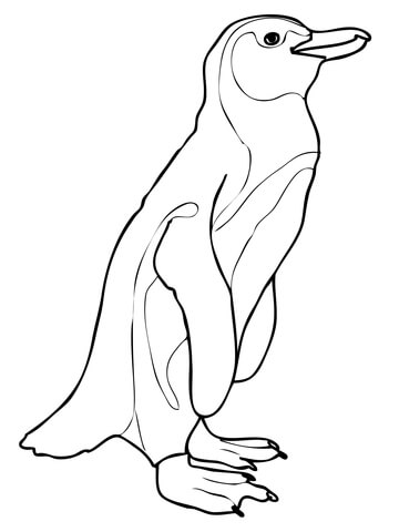 360x480 African Penguin Coloring Page Free Printable Pages