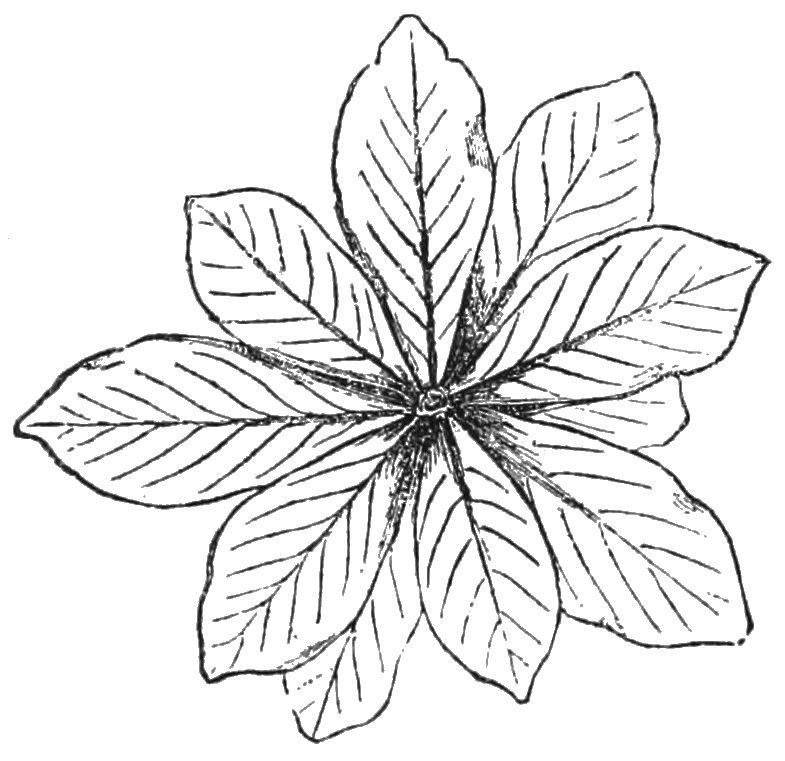 785x761 Filepsm V27 D504 The Bulbous Shape Of Plants From Arid South