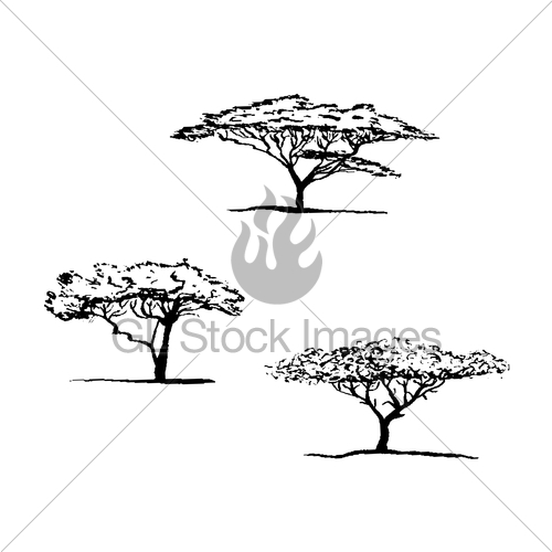 500x500 Vector Silhouette Of Acacia Tree. African Tree Gl Stock Images