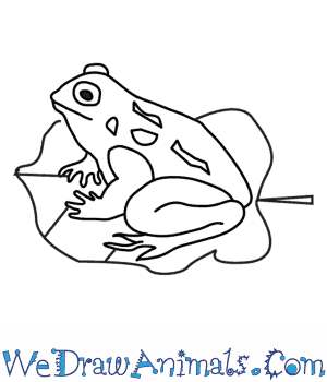 300x350 How To Draw A Toad