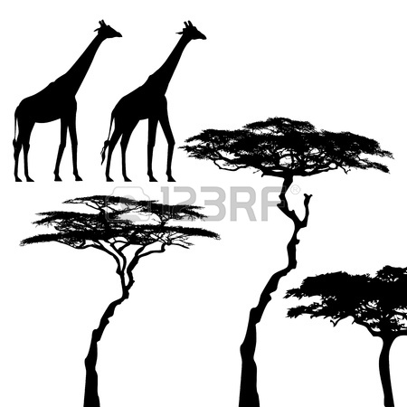 450x450 Vector Silhouette Of Acacia Tree. African Tree Set. Royalty Free