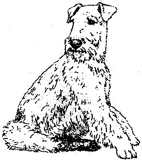 291x330 Airedale Terrier Page
