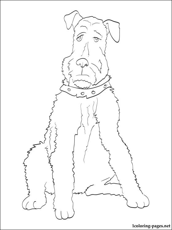 560x750 Airedale Terrier Coloring Page Coloring Pages