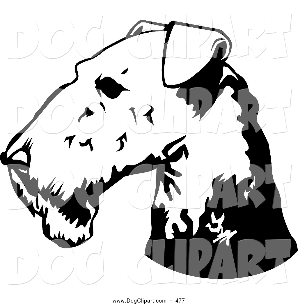 1024x1044 Clip Art Of A Airedale Terrier Dog Looking Left By David Rey