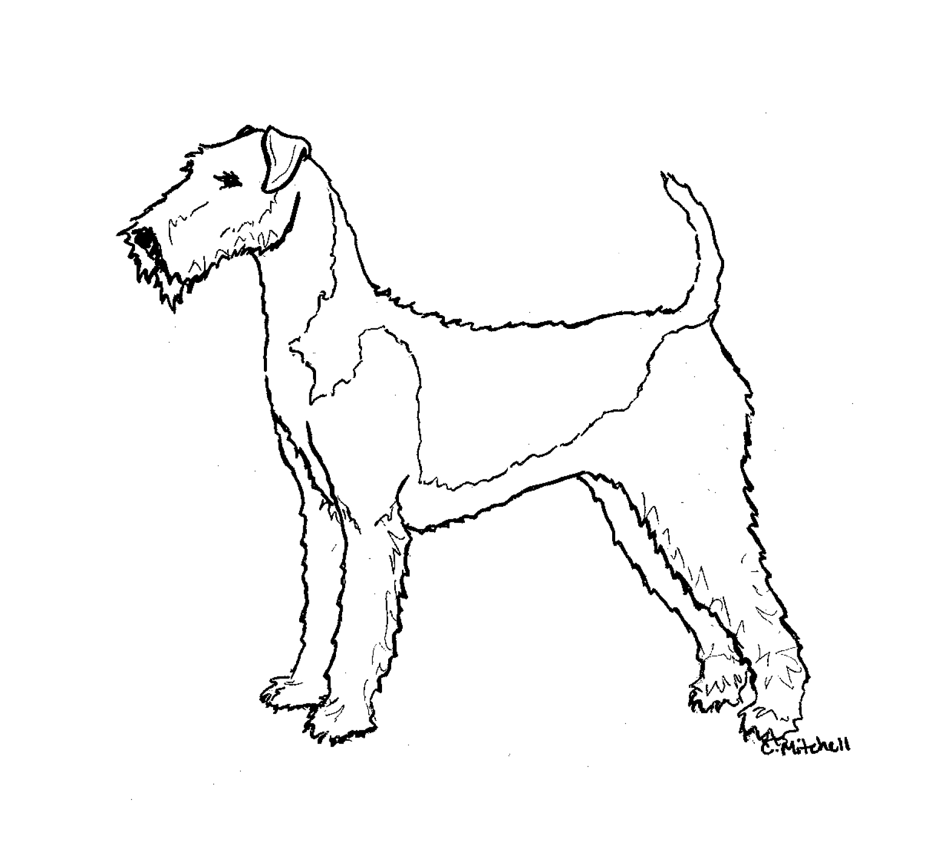 1842x1652 N'East Illustrated Airedale Terrier N'East Style