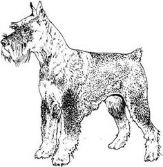 236x241 Scottish Terrier Sketching For Effect Scottish