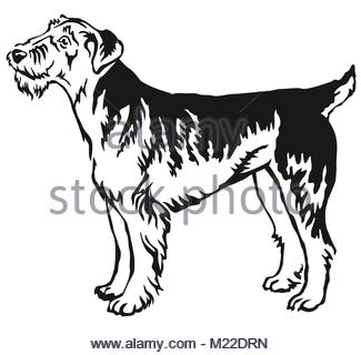 325x320 Vector Sketch Dog Airedale Terrier Breed Stock Vector Art