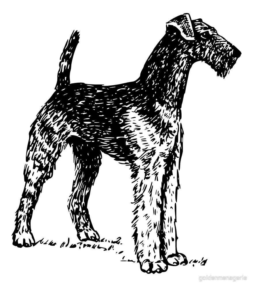 879x1000 Airedale Terrier Drawing By Goldenmenagerie Redbubble