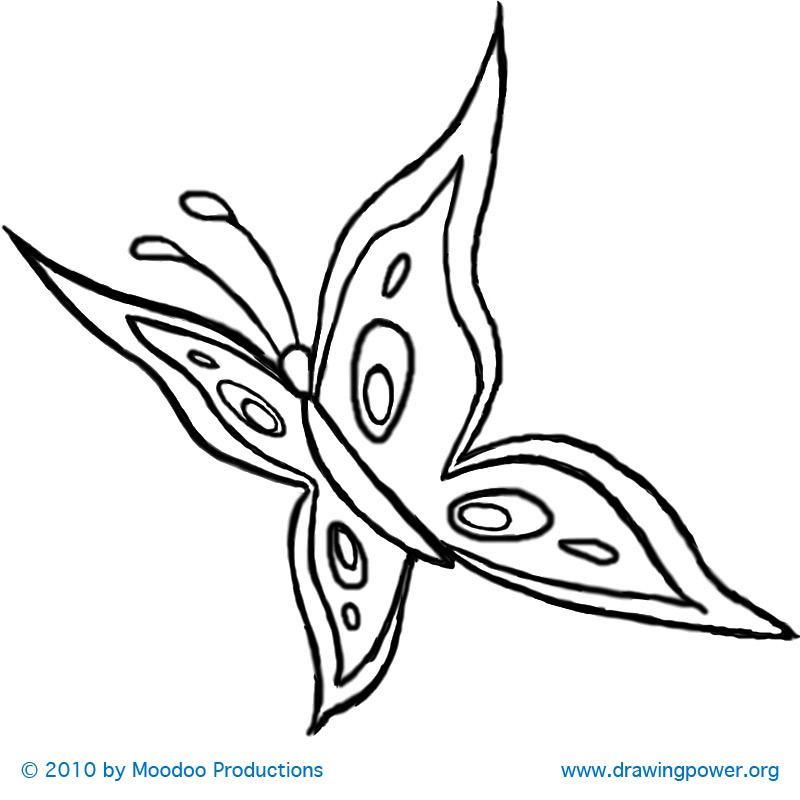 800x800 Drawn Butterfly Flight Drawing
