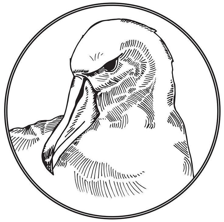 Albatross Drawing
