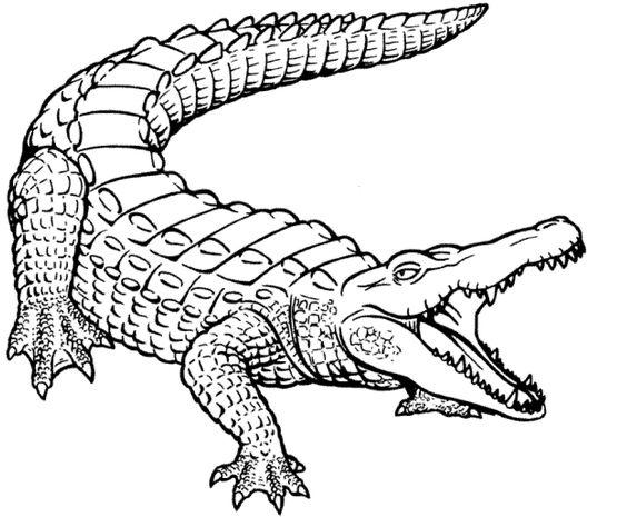 Aligator Drawing