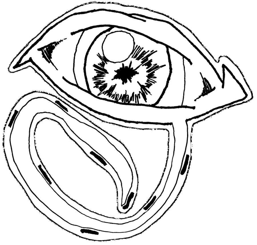 900x857 The All Seeing Eye 2 By Neko Of Lotherian
