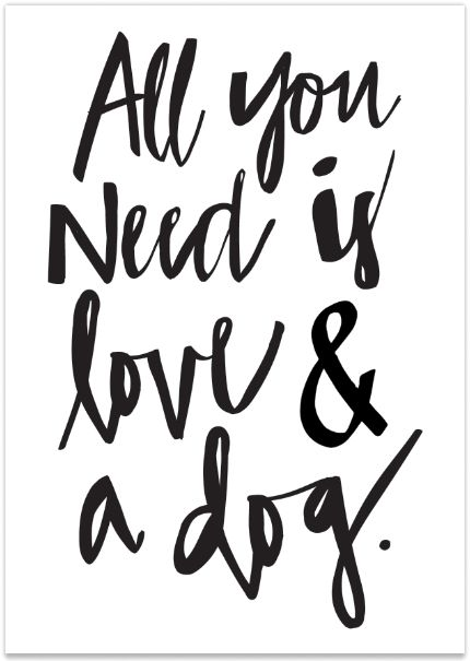 430x605 Motivational Quotes All You Need Is Love And A Dog Quotes