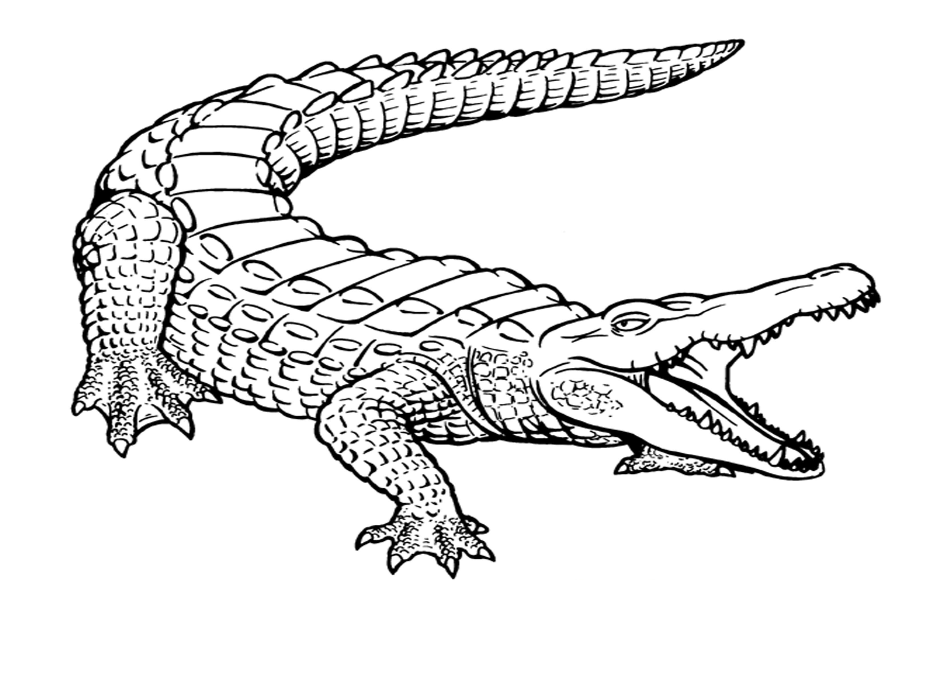 3300x2400 Crocodile Drawing For Kids How To Draw Cartoons Crocodile Easy