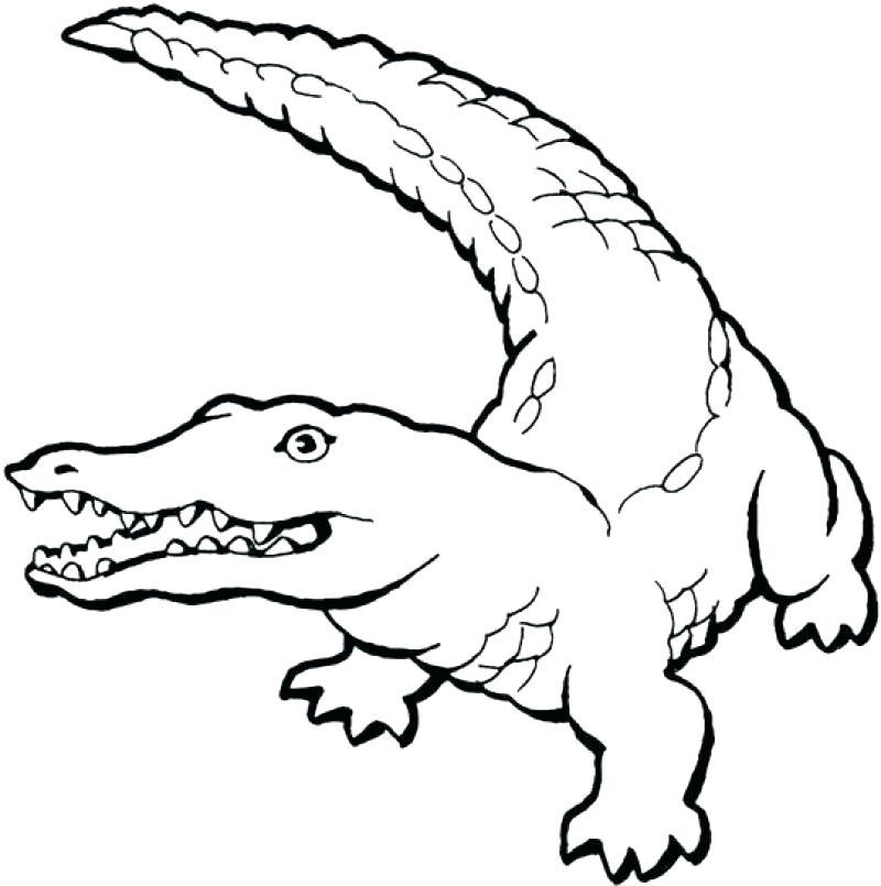 800x805 Alligator Coloring Pages Alligator Coloring Page Alligator