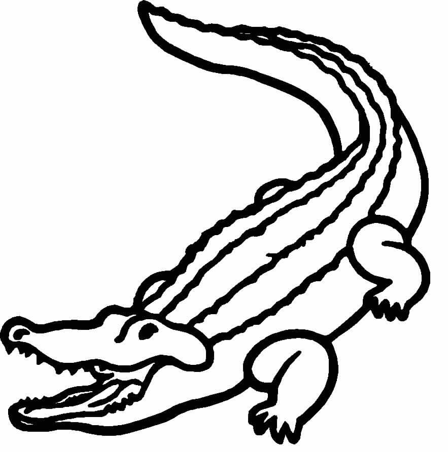 883x892 Alligator