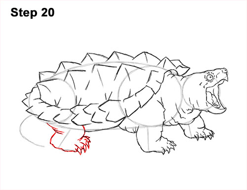 500x386 How to Draw an Alligator Snapping Turtle