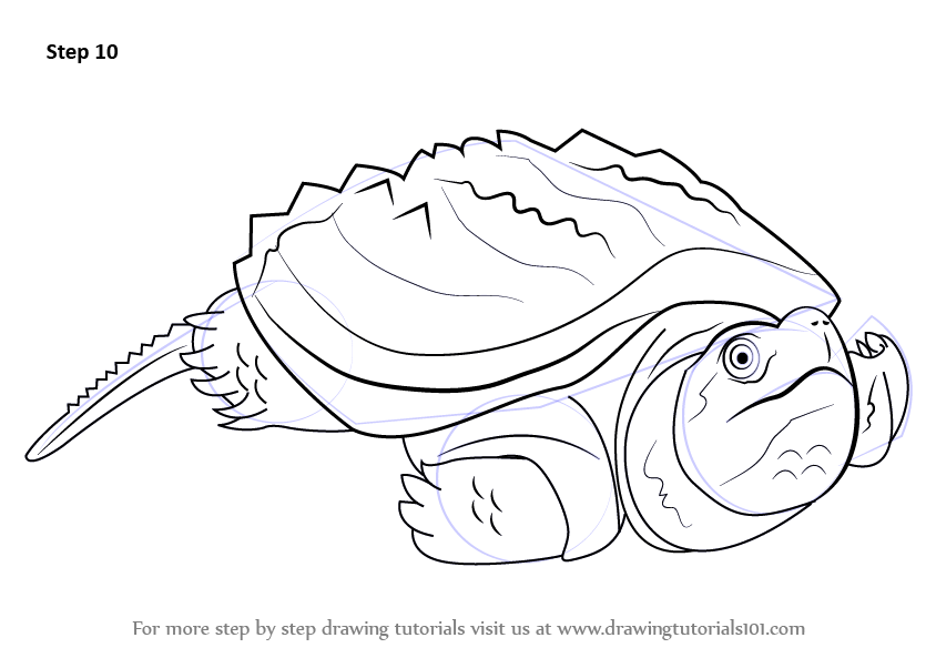 844x593 Learn How to Draw an Alligator Snapping Turtle (Reptiles) Step by