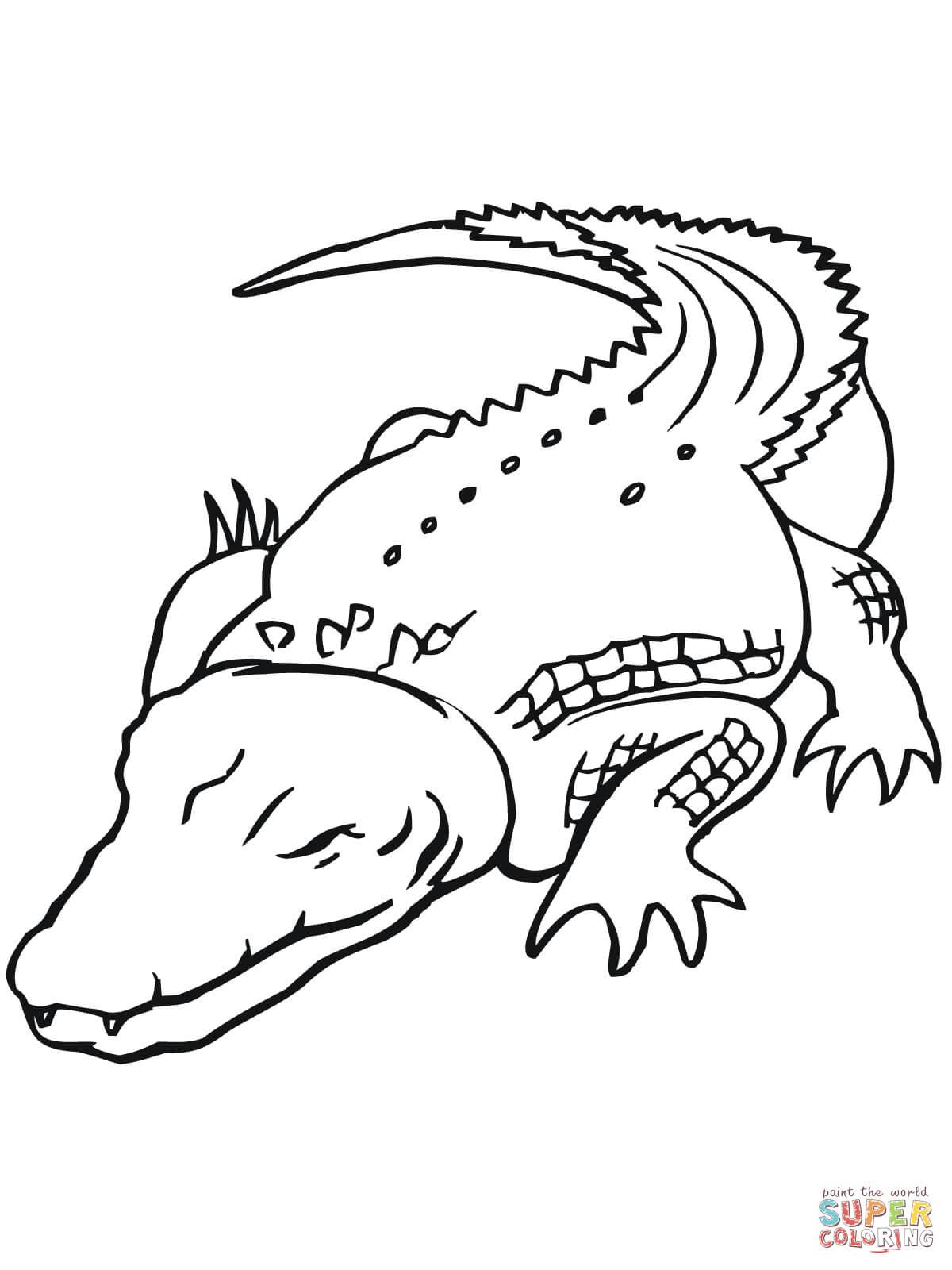 1200x1600 Australian Saltwater Crocodile Coloring Page Free Printable