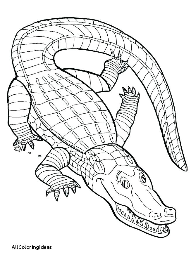 653x897 Elegant Alligator Coloring Page New Pictures Printable Power Of