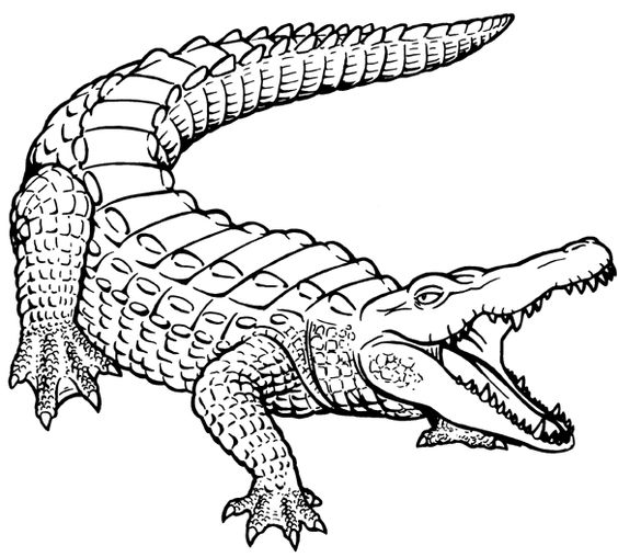 564x508 How to Draw a Crocodile Drawing and art Pinterest Crocodile