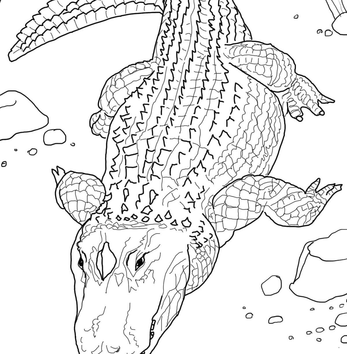 1200x1224 Inspirational Alligator Coloring Pages In For Toddler Free