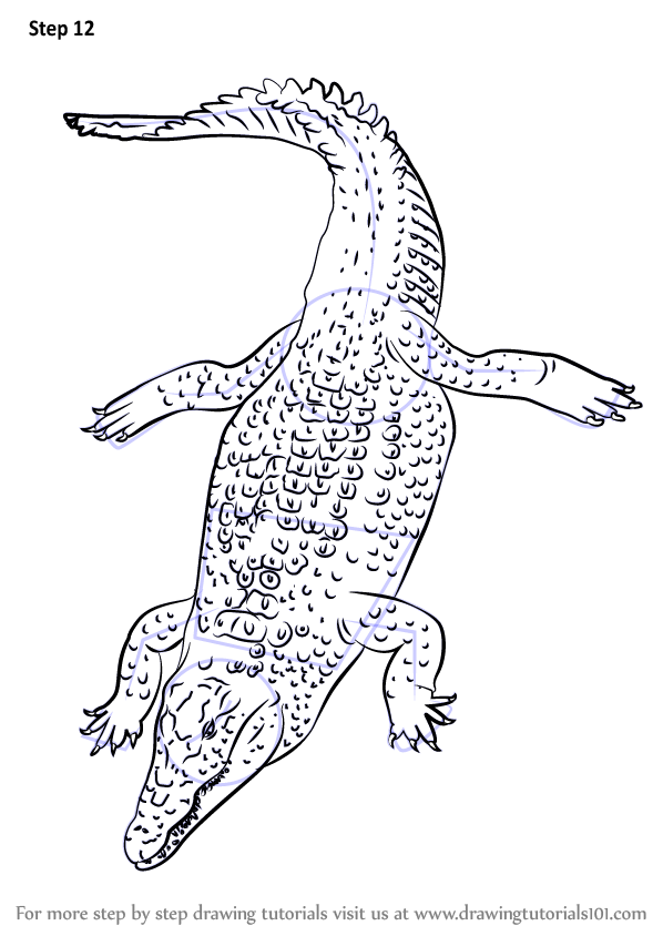 598x844 Learn How to Draw a Nile Crocodile (Reptiles) Step by Step