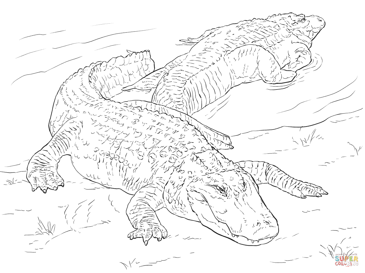1200x900 Two American Alligators coloring page Free Printable Coloring Pages
