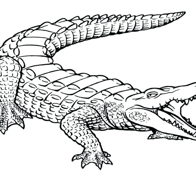 678x600 Alligator Coloring Page Inspiring Alligator Coloring Page With