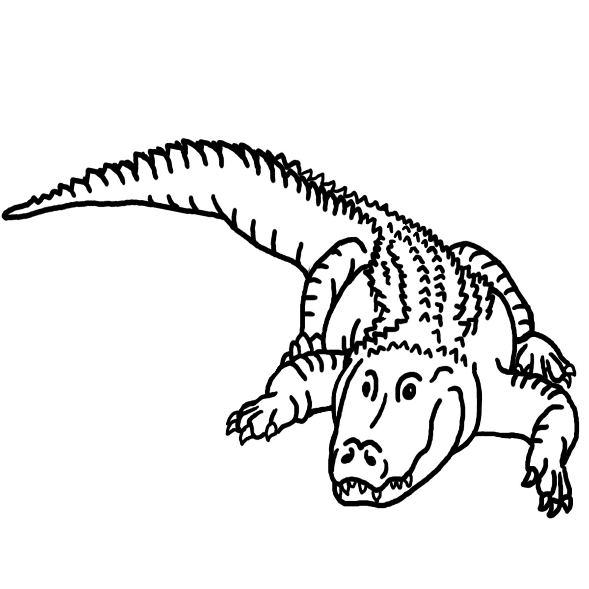 1200x1200 Clip Art Clip Art Alligator