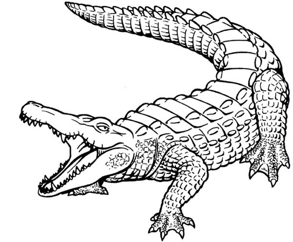 600x495 Coloring Pages Crocodile