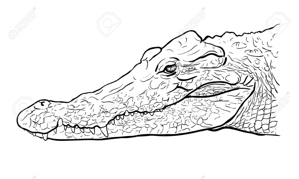 1024x614 Drawing Of A Crocodile Crocodile Cartoon Alligator Line Art