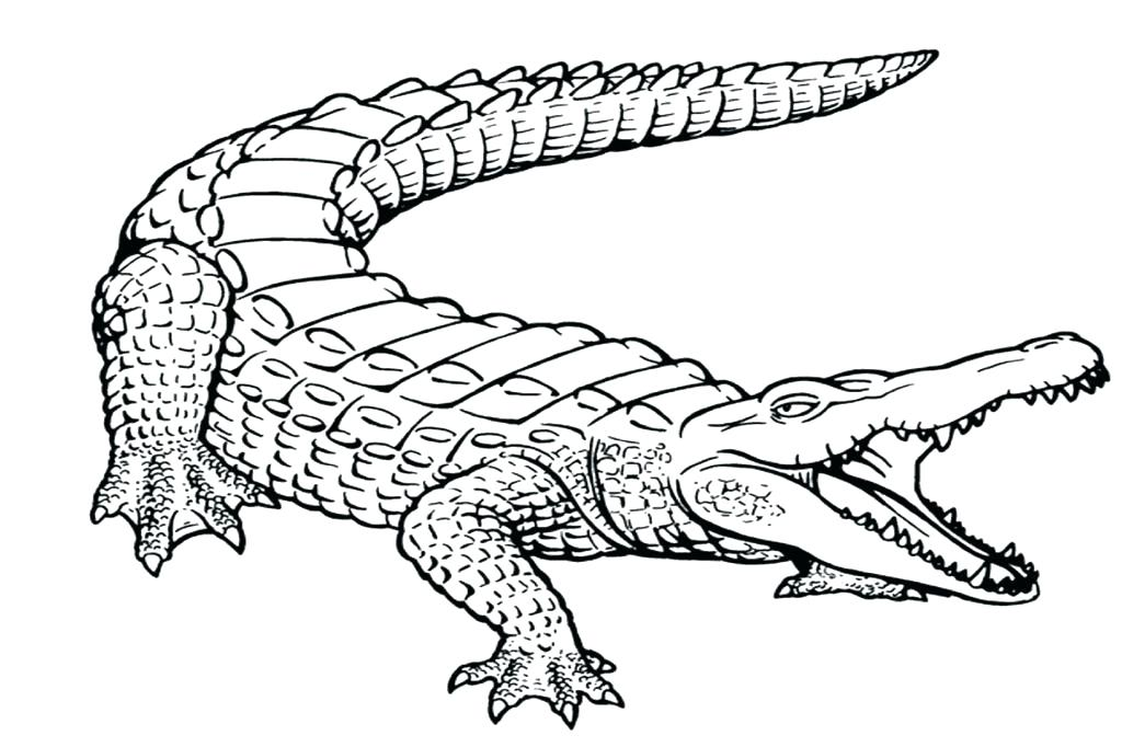 1024x682 Florida Gators Coloring Pages Gator Coloring Pages Alligator