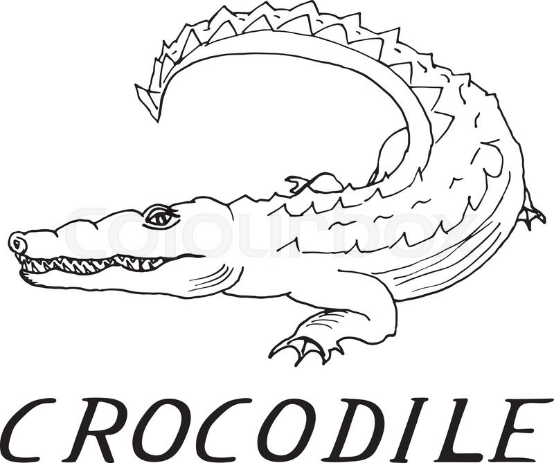 800x669 Hand draw a crocodile style sketch on a black and white background