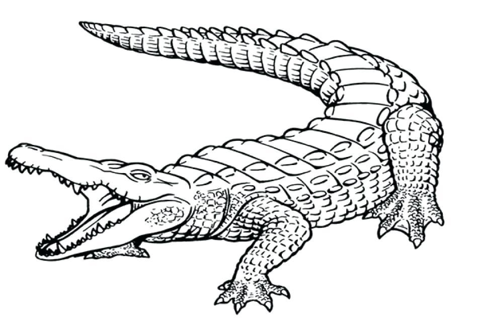 960x640 Sizable Alligator Coloring Sheets Gator Pages John Deere