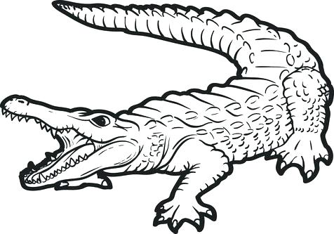 476x333 Alligator Coloring Pages Alligator Coloring Page Alligator